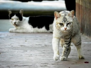 how to keep stray cats away - look at this mean cat!